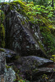 Schilderachtige zwarte stenen onder groen mos in het bos Stock Fotografie