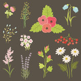Schilderende bloemen en bessen Royalty-vrije Stock Afbeeldingen