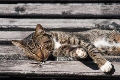 Bewegungslose Katze Lizenzfreie Stockbilder