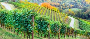Schilderwijngaarden van Piemonte in de herfstkleuren Italië stock afbeelding
