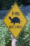 Schildkröte-Überfahrt Stockbild