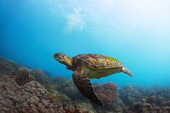 Schildkröte Stockbild