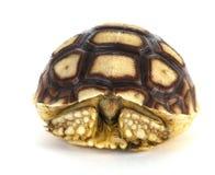 Schildkröte Lizenzfreies Stockfoto