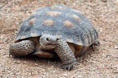Schildkröte lizenzfreies stockbild