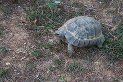 Schildkröte auf dem Land Stockfotos