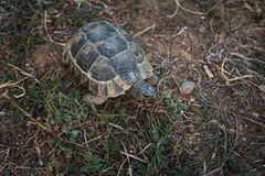 Schildkröte auf dem Land Stockfoto