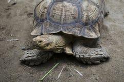 Schildkröte auf dem Land Lizenzfreie Stockfotografie