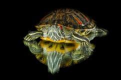 Schildkröte auf dem Spiegel Stockfotografie