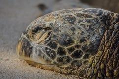 Schildkröte auf dem Ufer Stockfotografie