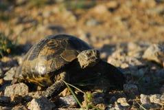 Schildkröte auf den Felsen Lizenzfreie Stockbilder