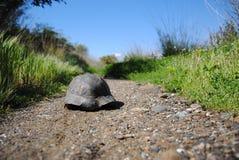 Schildkröte auf der Straße Stockfoto