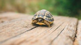Schildkröte auf einem Holzbalken Stockbilder