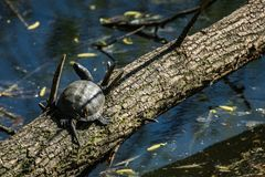 Schildkröte auf einem Klotz stockbild
