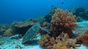 Schildkröte auf einem Korallenriff Lizenzfreie Stockbilder