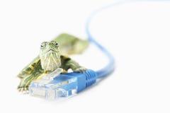 Schildkröte auf LAN-Seilzug Stockbilder