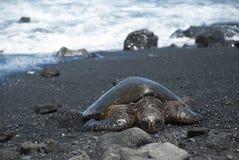 Schildkröte auf schwarzem Sandstrand Stockfotografie