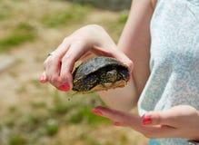 Schildkröte in den Händen von Frauen Stockbild