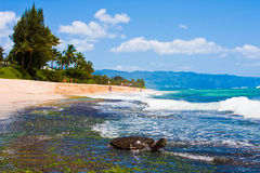 Schildkröte, die den Sonnenschein im Strand in Oahu, Hawaii genießt Stockfotografie