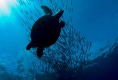 Schildkröte, die eine Masse der Steckfassungen kreuzt Stockbilder