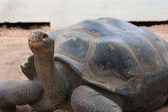 Schildkröte, die nach links schaut stockfoto