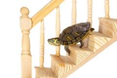 Schildkröte, die unten geht Lizenzfreies Stockfoto
