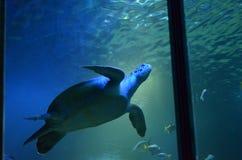 Schildkröte in einem Behälter Lizenzfreie Stockfotos