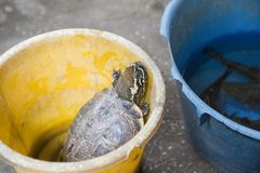 Schildkröte in einem Eimer lizenzfreies stockfoto