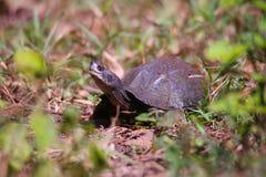 Schildkröte an einem sonnigen Tag Stockfotografie