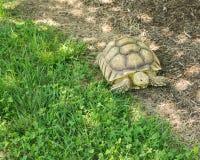 Schildkröte an erforschen Park lizenzfreie stockfotografie