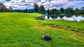 Schildkröte am Golfclub Stockbild
