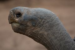 Schildkröte Headshot, der zur linken Seite schaut stockbild