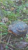 Schildkröte im Holz stockbild