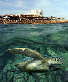 Schildkröte im Meer Lizenzfreie Stockfotografie