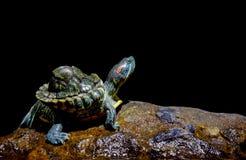 Schildkröte im schwarzen Hintergrund stockfoto