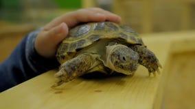 Schildkröte im Zoo tier stock video footage