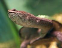 Schildkröte mit einem langen Kopf in einem Aquarium lizenzfreies stockbild