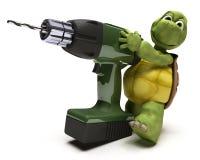 Schildkröte mit Leistungbohrgerät Stockfoto