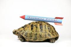 Schildkröte mit Rocket Lizenzfreie Stockfotos
