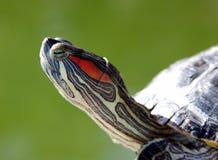 Schildkröte - Porträt Lizenzfreies Stockbild