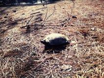 Schildkröte selfie lizenzfreies stockfoto