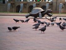 Schildkröte-Tauben Stockbilder