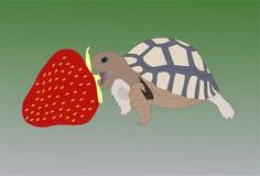 Schildkröte und Erdbeere Stockbild