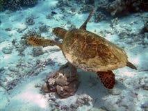 Schildkröte und Korallenriff lizenzfreie stockfotografie