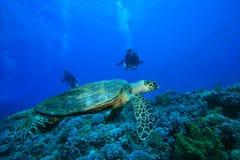 Schildkröte-und Unterwasseratemgerät-Taucher stockbild