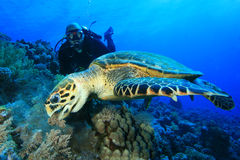 Schildkröte-und Unterwasseratemgerät-Taucher Lizenzfreie Stockfotografie