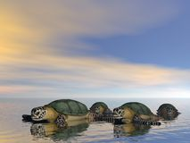 Schildkrötefamilie Stockfotos