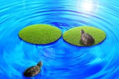 Schildkröten über der Insel. Lizenzfreie Stockfotos