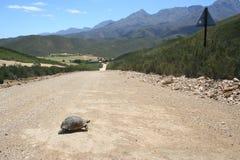 Schildkröten-Überfahrt Stockbilder