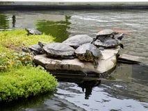 schildkröten Stockfotografie
