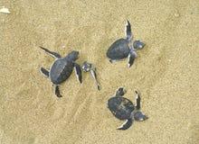 Schildkröten Lizenzfreie Stockfotografie